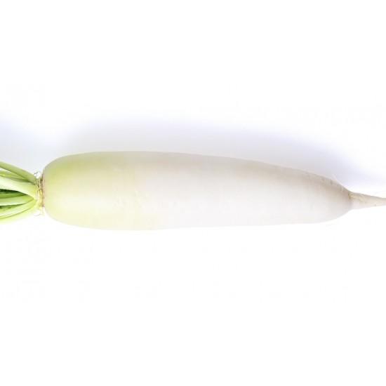 Radis blanc 1 pièce